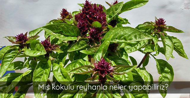 reyhan-bitkisi-candir