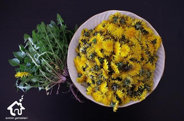 Karahindiba Çiçeğinin Faydaları