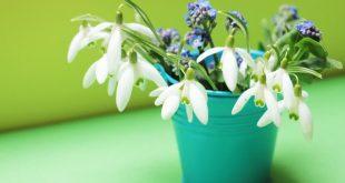 kardelen çiçeğinin faydaları