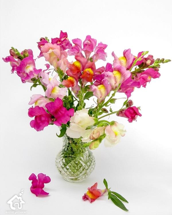 Aslan ağzı çiçeğinin faydaları